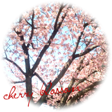 護国寺_桜_B002_ぼ