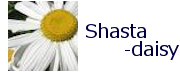 shastadaisy